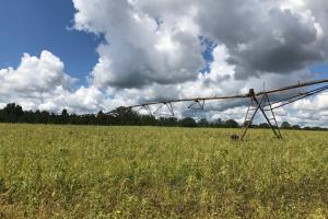 Wheeler County Irrigated Farm, Timber & Recreational Tract