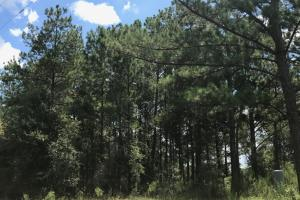 Wheeler County Irrigated Farm, Timber & Recreational Tract in Wheeler, GA (13 of 31)