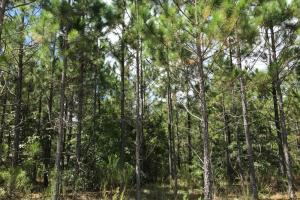 Wheeler County Irrigated Farm, Timber & Recreational Tract in Wheeler, GA (15 of 31)