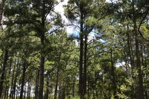 Wheeler County Irrigated Farm, Timber & Recreational Tract in Wheeler, GA (17 of 31)