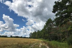 Wheeler County Irrigated Farm, Timber & Recreational Tract in Wheeler, GA (20 of 31)