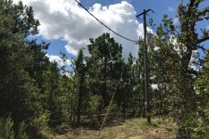 Wheeler County Irrigated Farm, Timber & Recreational Tract in Wheeler, GA (23 of 31)