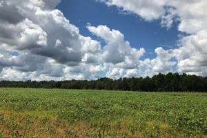 Wheeler County Irrigated Farm, Timber & Recreational Tract in Wheeler, GA (24 of 31)