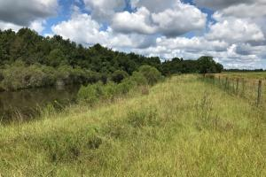 Wheeler County Irrigated Farm, Timber & Recreational Tract in Wheeler, GA (8 of 31)