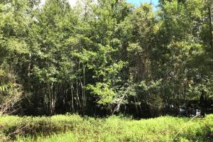 Wheeler County Irrigated Farm, Timber & Recreational Tract in Wheeler, GA (10 of 31)