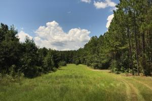 Laurens County Timber, Hunting and Homesite Tract in Laurens, GA (9 of 20)