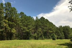 Laurens County Timber, Hunting and Homesite Tract in Laurens, GA (10 of 20)