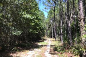 Laurens County Timber, Hunting and Homesite Tract in Laurens, GA (12 of 20)