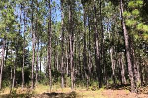 Laurens County Timber, Hunting and Homesite Tract in Laurens, GA (20 of 20)