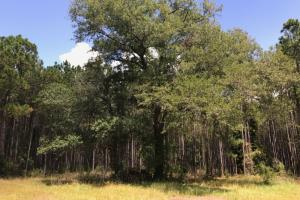 Laurens County Timber, Hunting and Homesite Tract in Laurens, GA (6 of 20)