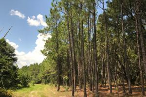 Laurens County Timber, Hunting and Homesite Tract in Laurens, GA (7 of 20)