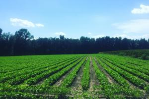 Lamar Farm, Hunting and Investment Opportunity - Lee County SC