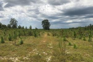 Laurens County Long Leaf Investment & Hunting Tract