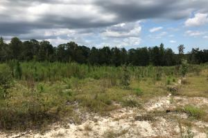 Laurens County Long Leaf Investment & Hunting Tract in Laurens, GA (10 of 11)