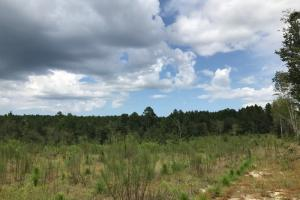 Laurens County Long Leaf Investment & Hunting Tract in Laurens, GA (11 of 11)