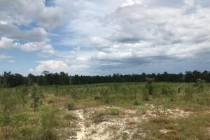 Laurens County Long Leaf Investment & Hunting Tract in Laurens, GA (5 of 11)