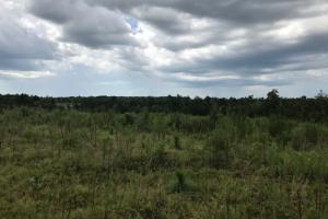 Laurens County Long Leaf Investment & Hunting Tract in Laurens, GA (7 of 11)