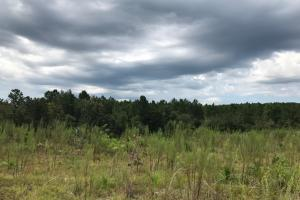 Laurens County Long Leaf Investment & Hunting Tract in Laurens, GA (9 of 11)