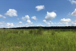 Johnson County Ag Field, Pond & Hunting Tract in Johnson, GA (11 of 24)