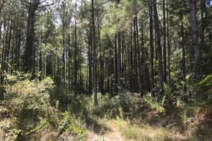 Treutlen County Pasture & Hunting Property in Treutlen, GA (2 of 22)