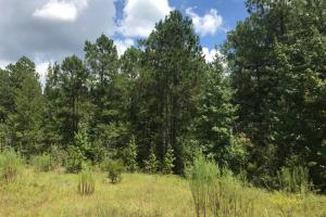 Treutlen County Pasture & Hunting Property in Treutlen, GA (18 of 22)