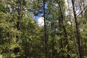 Treutlen County Pasture & Hunting Property in Treutlen, GA (19 of 22)