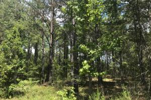 Treutlen County Pasture & Hunting Property in Treutlen, GA (22 of 22)