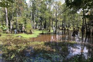 Treutlen County Pasture & Hunting Property in Treutlen, GA (4 of 22)