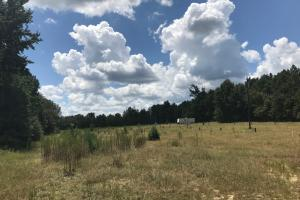 Treutlen County Pasture & Hunting Property in Treutlen, GA (9 of 22)