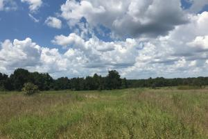 Treutlen County Pasture & Hunting Property in Treutlen, GA (11 of 22)