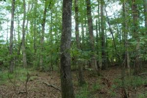 80+/- Acres of Timberland & Hunting Property - Polk County AR