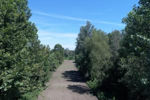 1,110 Acres Bottomland Hardwoods on the Mississippi River in Phillips, AR (4 of 76)