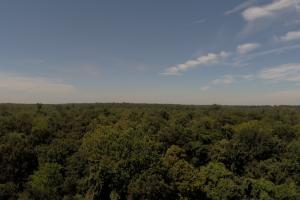 1,110 Acres Bottomland Hardwoods on the Mississippi River in Phillips, AR (13 of 76)