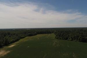 1,110 Acres Bottomland Hardwoods on the Mississippi River in Phillips, AR (17 of 76)
