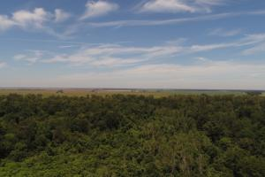 1,110 Acres Bottomland Hardwoods on the Mississippi River in Phillips, AR (20 of 76)
