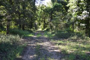 1,110 Acres Bottomland Hardwoods on the Mississippi River in Phillips, AR (22 of 76)