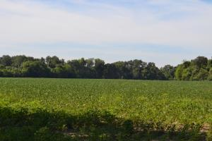 1,110 Acres Bottomland Hardwoods on the Mississippi River in Phillips, AR (23 of 76)