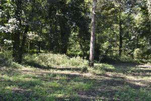 1,110 Acres Bottomland Hardwoods on the Mississippi River in Phillips, AR (24 of 76)