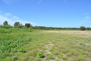 1,110 Acres Bottomland Hardwoods on the Mississippi River in Phillips, AR (30 of 76)