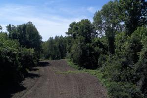 1,110 Acres Bottomland Hardwoods on the Mississippi River in Phillips, AR (8 of 76)