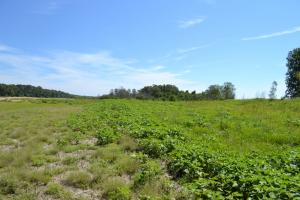1,110 Acres Bottomland Hardwoods on the Mississippi River in Phillips, AR (34 of 76)