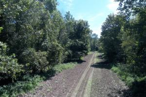 1,110 Acres Bottomland Hardwoods on the Mississippi River in Phillips, AR (9 of 76)