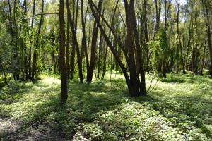 1,110 Acres Bottomland Hardwoods on the Mississippi River in Phillips, AR (41 of 76)