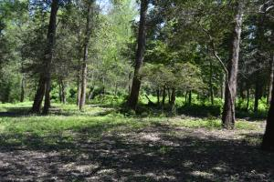 1,110 Acres Bottomland Hardwoods on the Mississippi River in Phillips, AR (46 of 76)