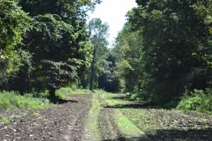 1,110 Acres Bottomland Hardwoods on the Mississippi River in Phillips, AR (47 of 76)