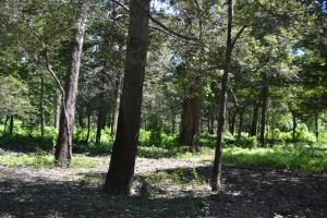 1,110 Acres Bottomland Hardwoods on the Mississippi River in Phillips, AR (48 of 76)