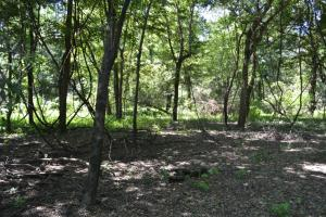 1,110 Acres Bottomland Hardwoods on the Mississippi River in Phillips, AR (50 of 76)