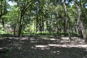 1,110 Acres Bottomland Hardwoods on the Mississippi River in Phillips, AR (51 of 76)