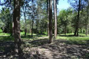 1,110 Acres Bottomland Hardwoods on the Mississippi River in Phillips, AR (52 of 76)