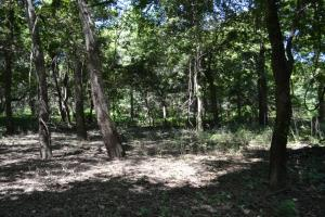 1,110 Acres Bottomland Hardwoods on the Mississippi River in Phillips, AR (53 of 76)